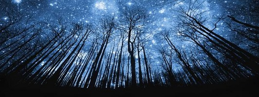 Tree Silhouette Against Starry Night Sky